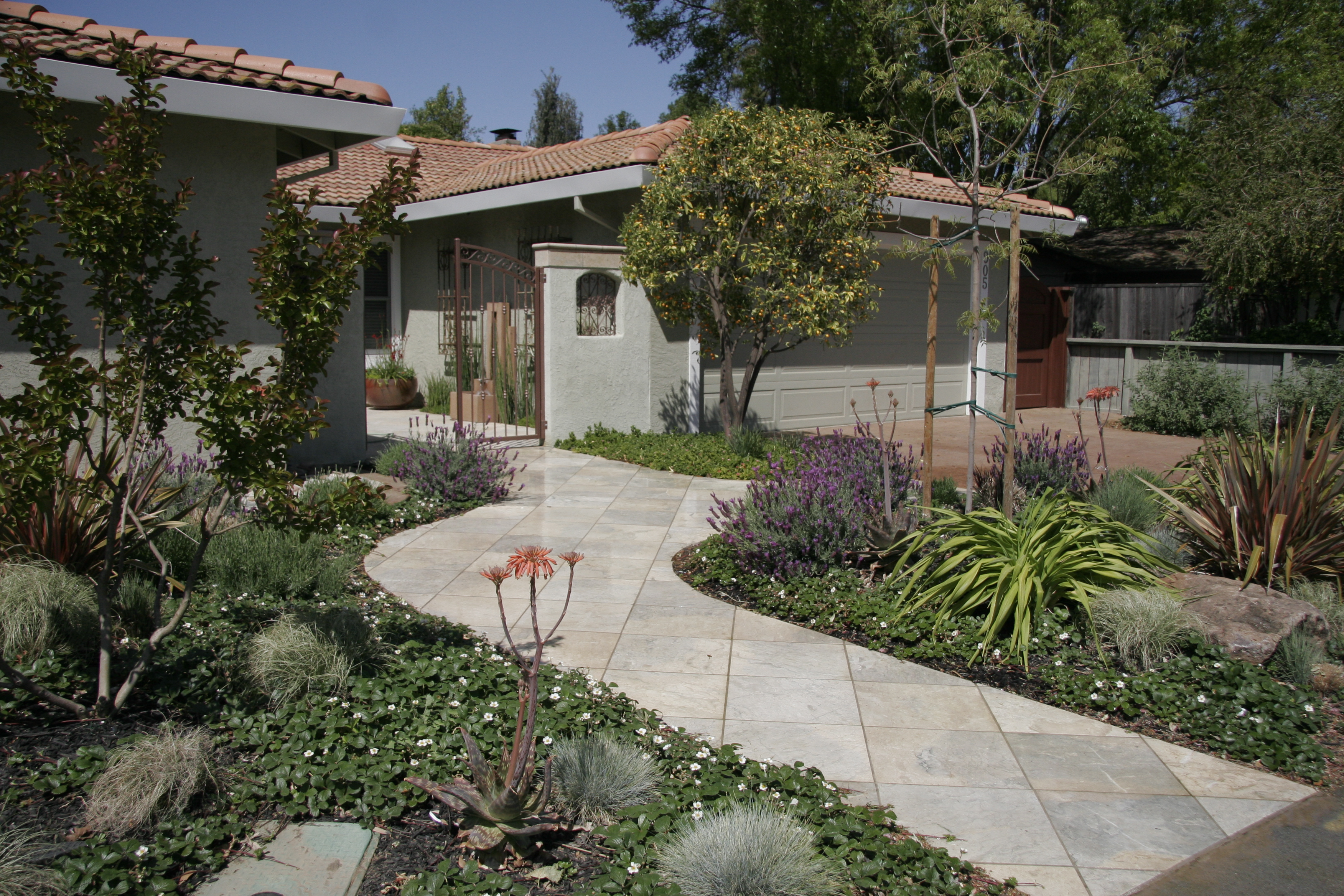 low maintenance drought tolerant landscape michael